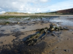 Submerged Forest, Broughton Bay