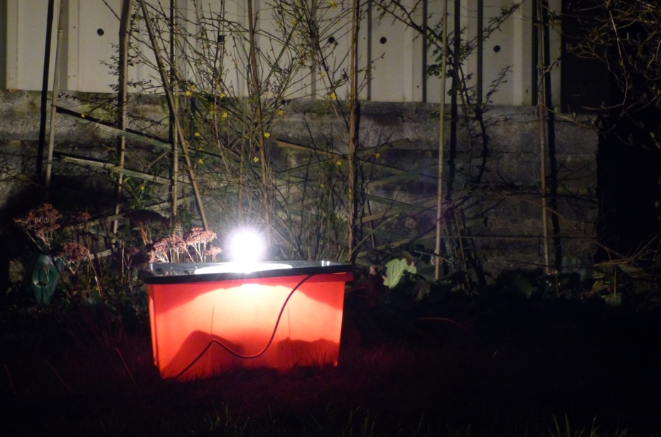 First run for my self-built moth trap