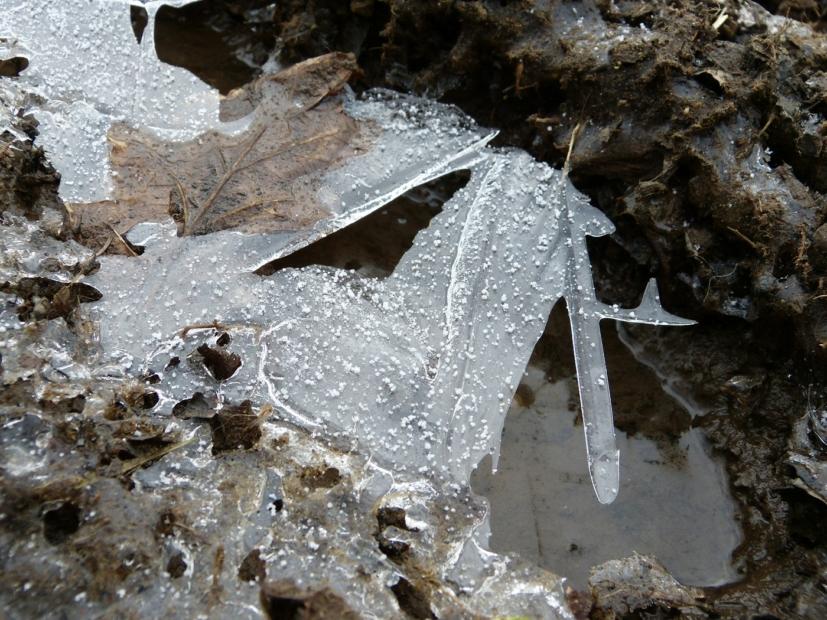Ice, Lower Lliw