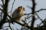 Goldfinch, Parc Slip