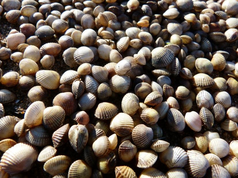 Shells, Llanelli