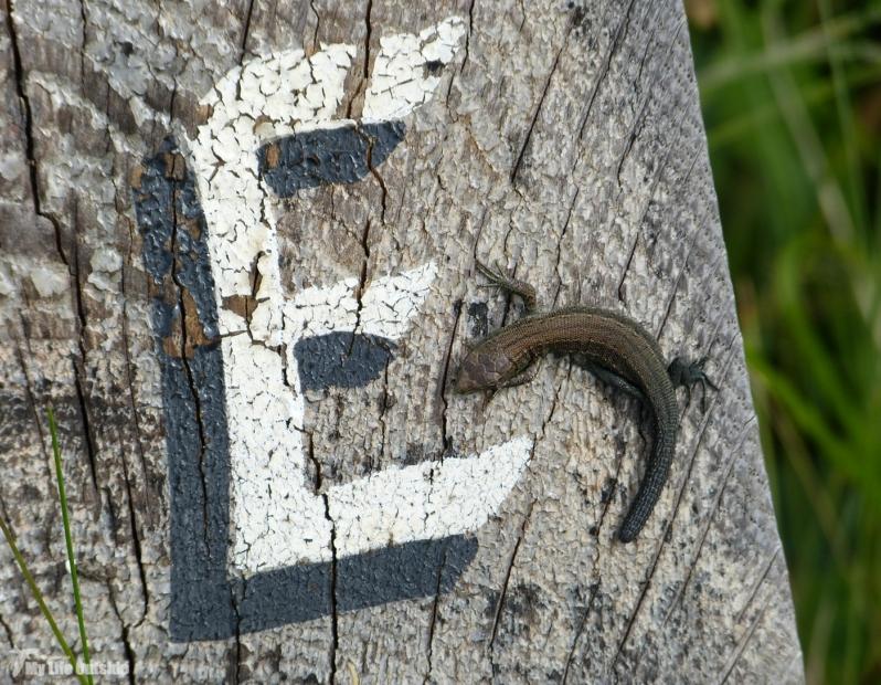 Lizard, Kenfig NNR