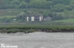 Gull-billed Tern, Loughor